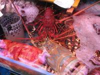 2007.2.15沖縄4