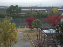 アパート前も紅葉です