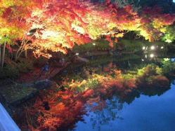 池の水面に紅葉が写っています