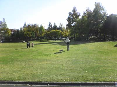 近代美術館前の芝生