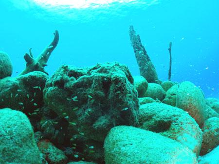 ラウラウビーチの漁礁!