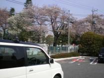 デニーズ駐車場からの桜