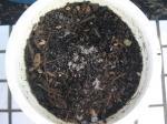 植木鉢幼虫