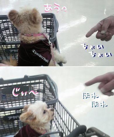 犬好きおじさん登場