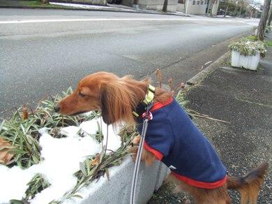 雪にもニオイがあるのかな?