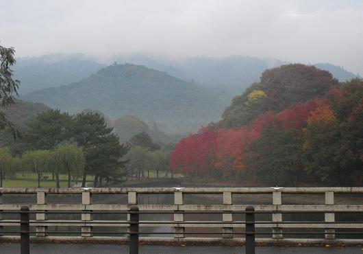 6 飛火野・春日原生林方面