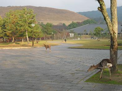 8 奈良公園・若草山