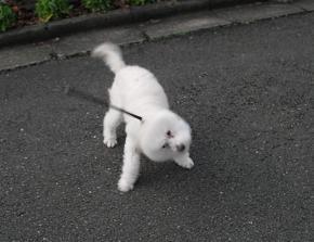 2 うれしい散歩