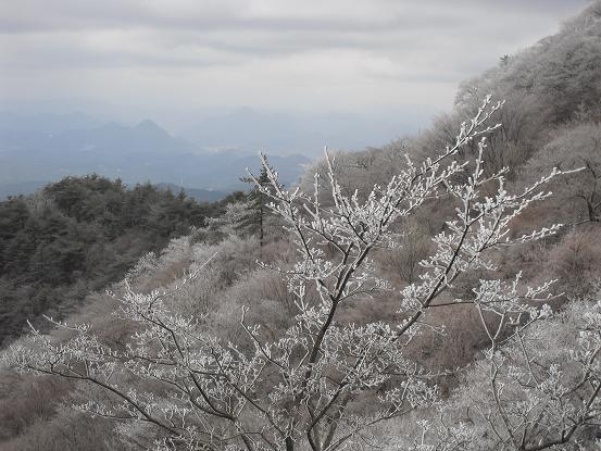 6 六甲の霧氷