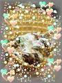 ●ミントミントチョコレートチョコレートチップ●