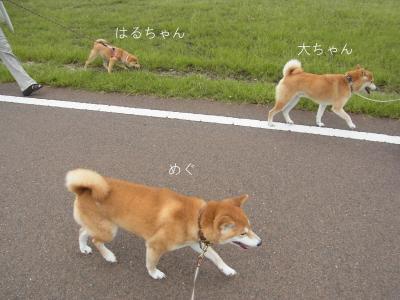 一緒に お散歩