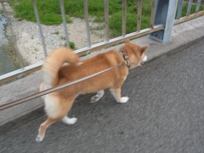 さぁ、公園に行こう!