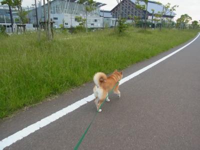 さぁ、歩くぞ!