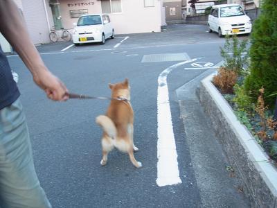 「こっちへ行きましょう!」