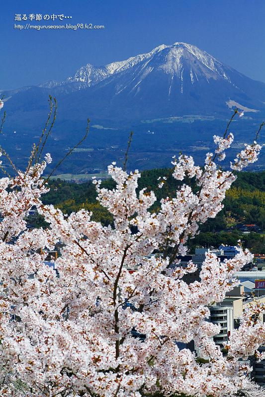 大山 桜 湊山公園 城山