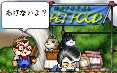 猫ねこー2