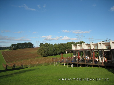 wild dog winery3