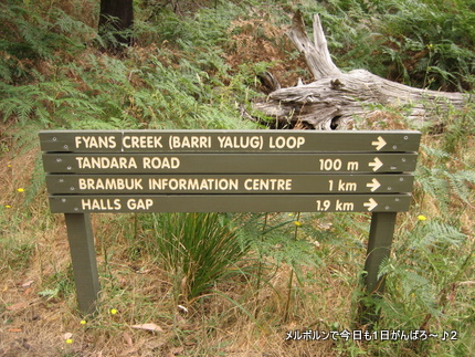 fyans creek loop