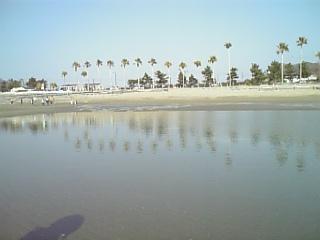 浜辺でフリスビー