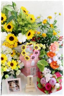 junoflower.jpg