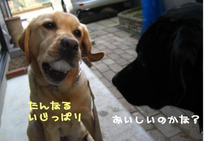 2008110いじっぱり