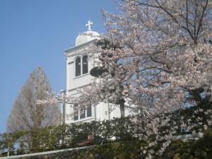 紐差教会と桜
