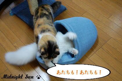 5_20071219102012.jpg