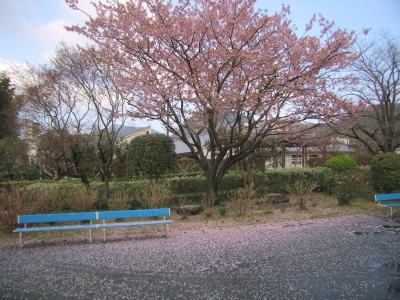 H230322桜