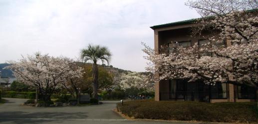 H230401桜