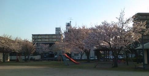H240401桜
