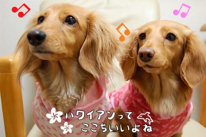 ME_aloha.jpg