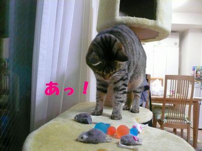 大掃除の宝物04