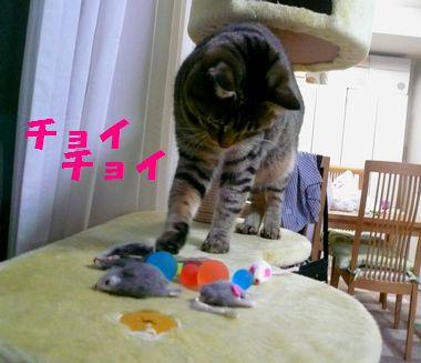 大掃除の宝物05