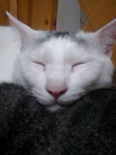 ちーの寝顔