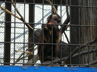 2/15小猿