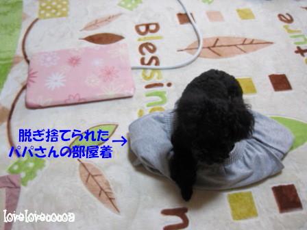 IMG_9831-cocoa.jpg