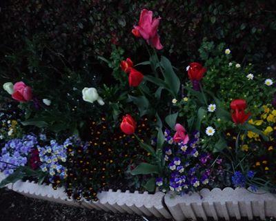 flower1_R.jpg