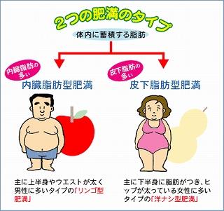 男性は 「内臓脂肪型肥満」、女性は 「皮下脂肪型肥満」 が多いです。