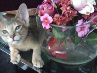 お花、似合う?