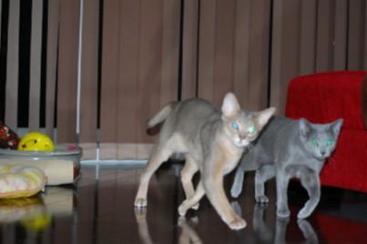 ミモとジンは仲良く遊びます♪