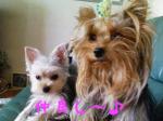 mint&mona
