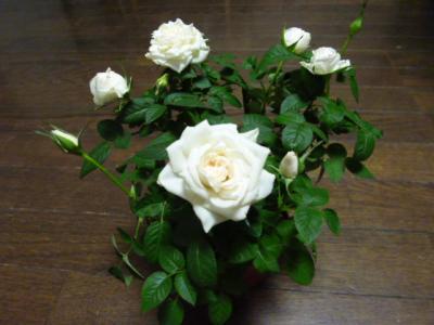 2011_0419_180037-P1010212.jpg