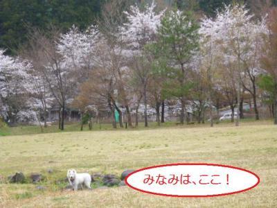 2011_0420_105348-P1010264.jpg