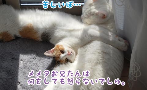 110602_日向ぼっこ03