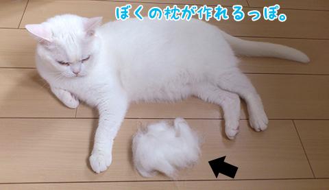 110620_抜け毛メメタ01