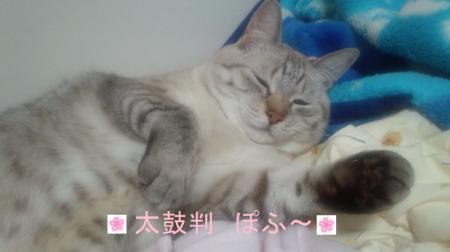 しぃちゃん 太鼓判