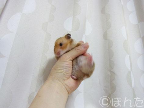 ぽてと _盗撮5