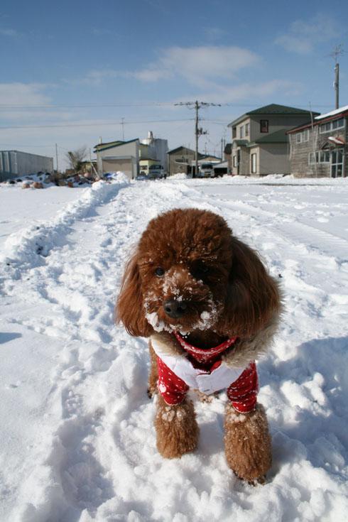 青空と雪まみれ
