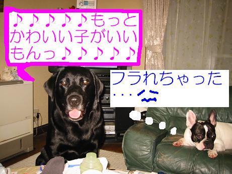 20060710213251.jpg