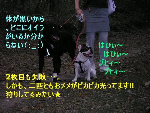 20061002215629.jpg